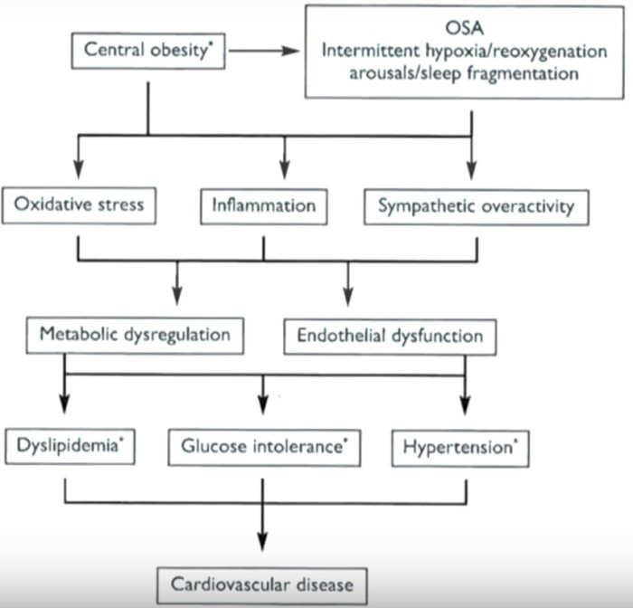 OSA pathophysiology